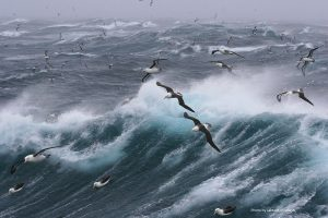 Gelassen gegen den Wind